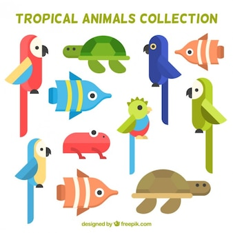 Collection of flat bird and tropical animal