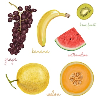 Collection of fruits painted with watercolors