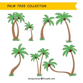 Collection of hand-drawn palm trees