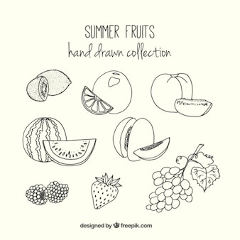 Collection of hand drawn summer fruit