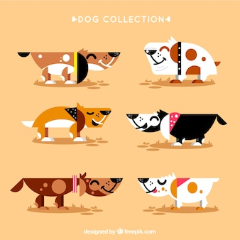Collection of nice dog in flat design