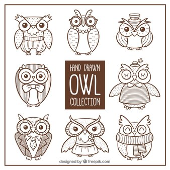 Collection of owl sketches