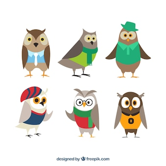 Collection of owls with clothes