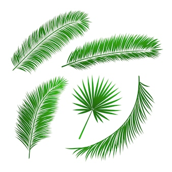 Collection of palm tree leaves isolated vector illustration