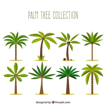 Collection of palm trees in flat design