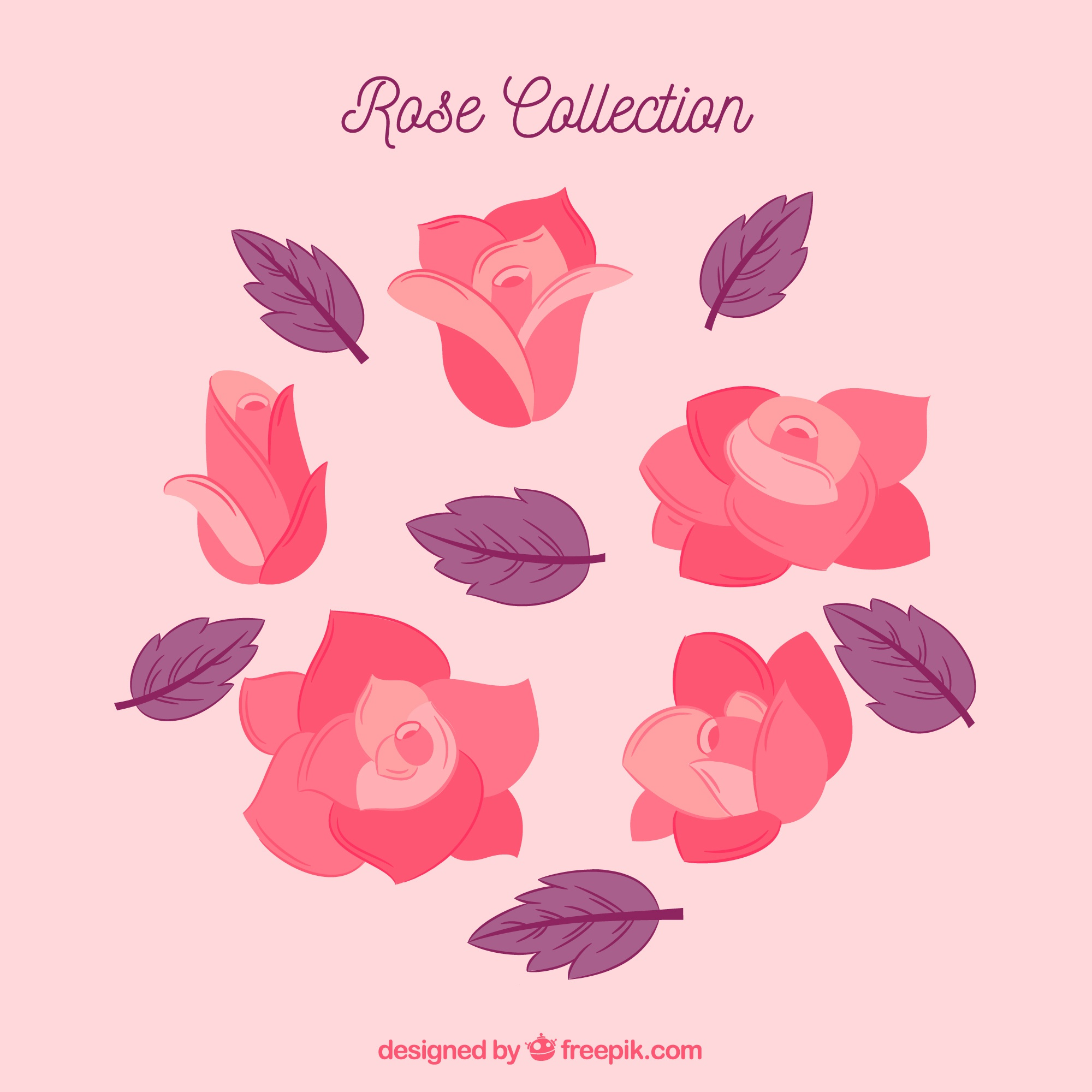 Collection of pink roses and purple leaves