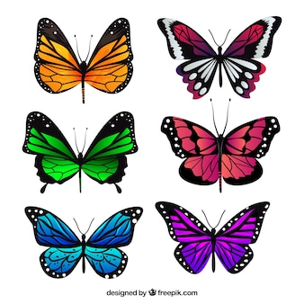Collection of realistic butterflies