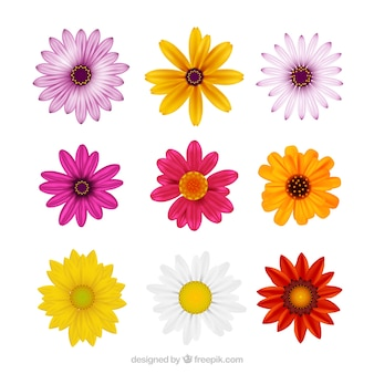 Collection of realistic daisies