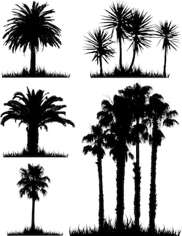 Collection of silhouettes of tropical trees