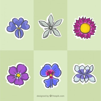 Collection of sketches colored wild flower