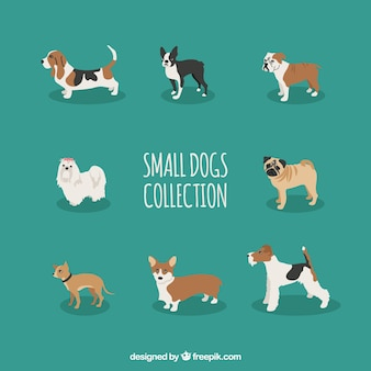Collection of small dog
