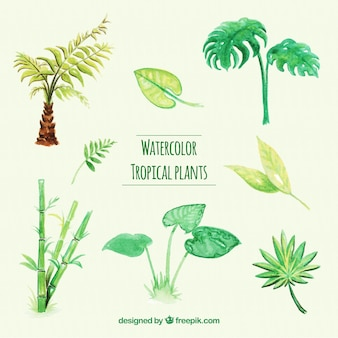 Collection of tropical watercolor plants