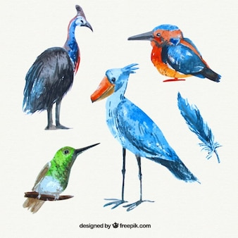 Collection of watercolor wild birds