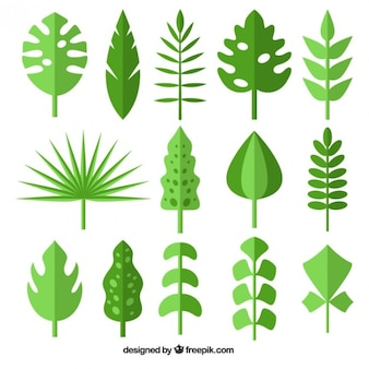 Collection of wild green leaf