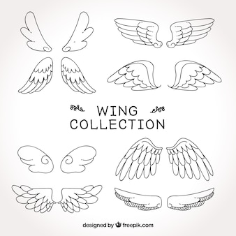 Collection of wings sketches