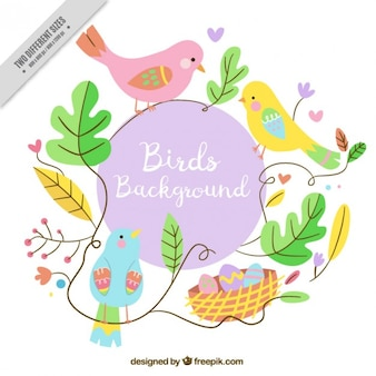 Colored lovely birds decorative background