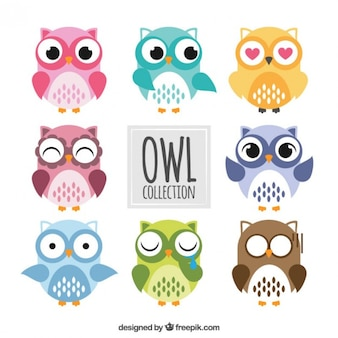 Colored owls collection