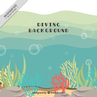 Colored seaweeds background of diving