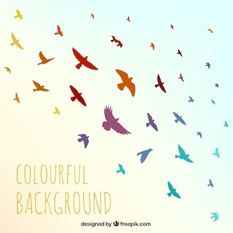Colorful birds background