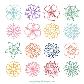 Colorful sketches of flowers set