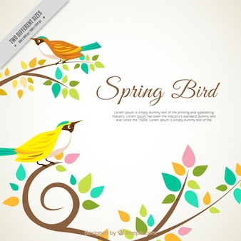 colorful spring bird background