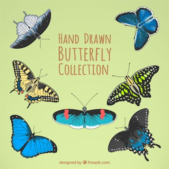 Colors sketches butterflies in realistic style