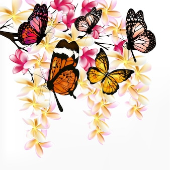 Coloured butterflies background