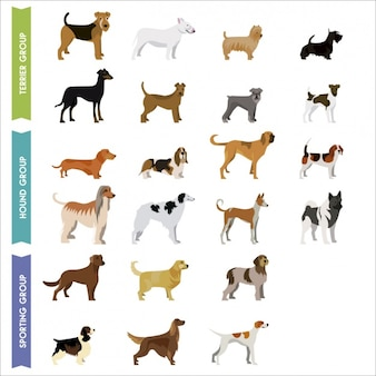 Coloured dogs collection