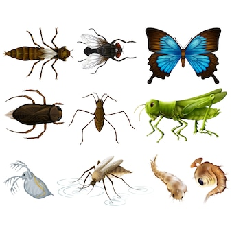 Coloured insects collection