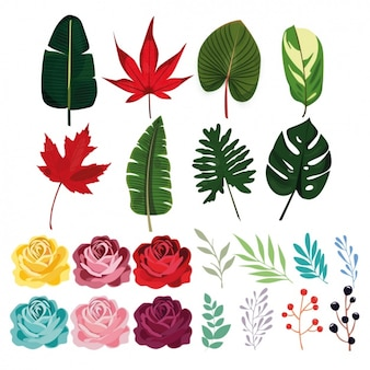 Coloured leaves collection
