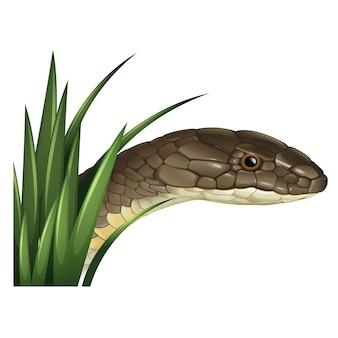 Coloured snake design