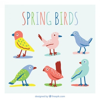 Coloured spring birds collection
