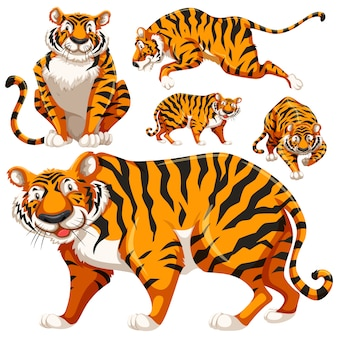 Coloured tigers collection