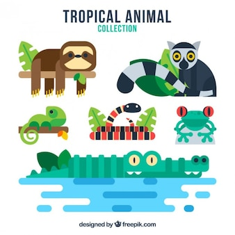 Coloured tropical animals collection