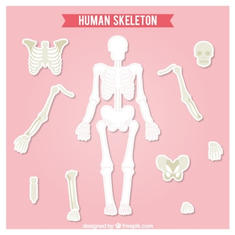 Cut out human skeleton