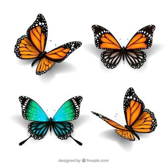 Cute butterflies in realistic style