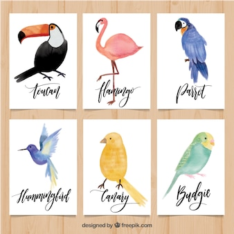 Cute cards with variety of watercolor birds