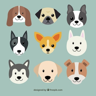 Cute dog breeds