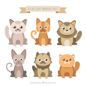 Cute flat cat breed set