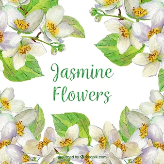 Cute jasmine background with watercolor style
