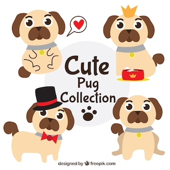 Cute pugs with fun style