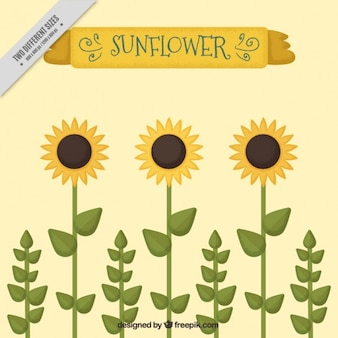 Cute sunflowers background