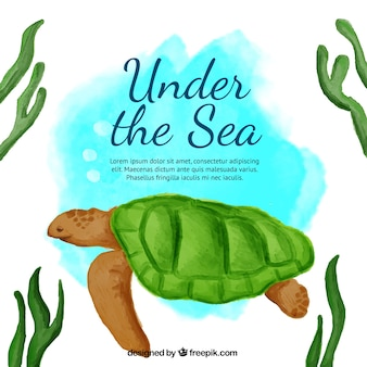 Cute watercolor background with a turtle