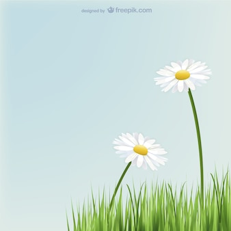 Daisies flowers with grass