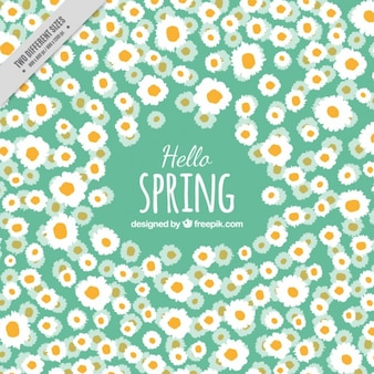 Daisy Spring Background