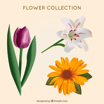 Decorative flowers in realistic style