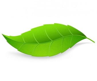 Detailed green leaf vector illustration