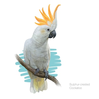 Detailed illustration of a sulphur-crested cockatoo