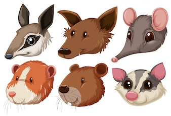 Different animal heads on white background illustration