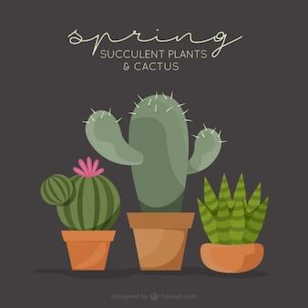 Different cactus pack